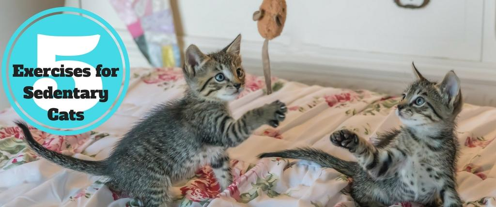 Exercises for Sedentary Cats